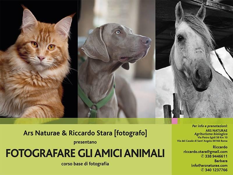 Corso di Fotografia con Riccardo Stara come fotografare gli amici animali
