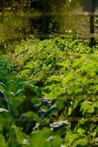 Agriturismo Ars Naturae Orto biologico
